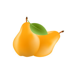 Realistic pear fruit with leaf isolated on white background. Vector illustration. Sweet fruit