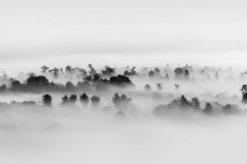 Fog over the forest, Black and white tones in minimalist photography