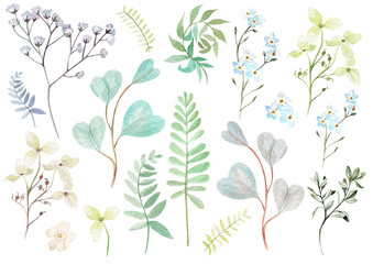 Watercolor set with forget-me flowers, wildflowers, eucalyptus leaves. Illustrations.