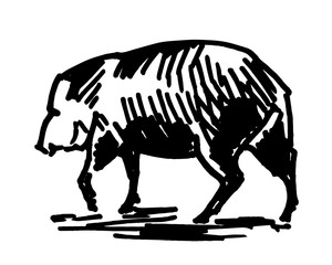 Vector illustration of a pig