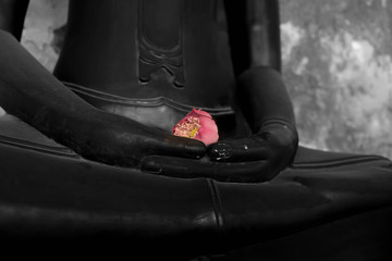 Pink lotus in hand of buddha statue