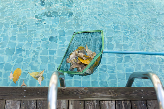 Cleaning swimming pool of fall leaves with cleaning net