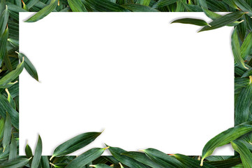 White Paper on a green leaf with white space, Lily leaf green overlapping background.