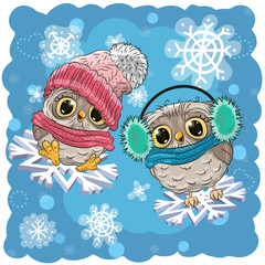 Two Cute Owls