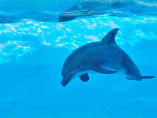 Dolphin swimming underwater