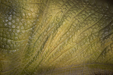 skin animal, reptile or batrachian texture for background