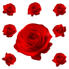 Red roses set isolated on white. EPS 10