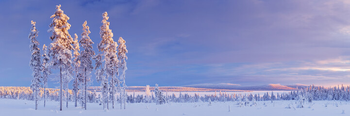Snowy landscape in Finnish Lapland in winter at sunset