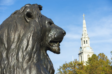 Handsome profile portrait of one of the beloved bronze lions in Trafalgar Square, London, England, installed in 1868, with the spire of St Martin-in-the-Fields church, built in 1726