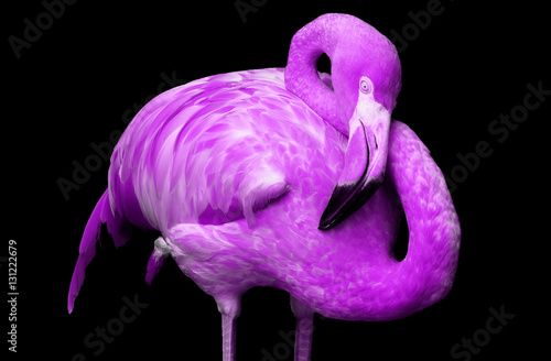 """""""Flamingo in purple """" Stock photo and royalty-free images ..."""