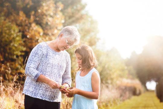 Grandmother showing granddaughter the seeds inside of a milkweed pod