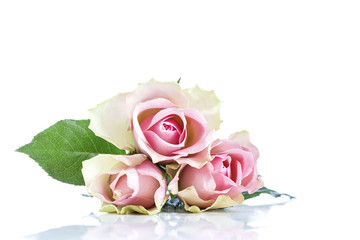 Pink rose flowers on white background- copy space