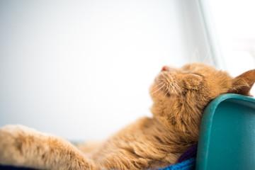 Cat sleeps on his back like a human, Smiling