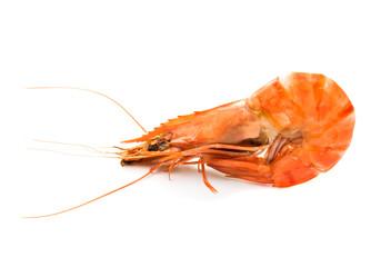 shrimp isolated