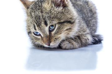 Isolated portrait of a kitten