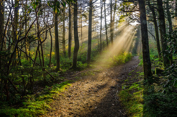 Sunshine filters through summer foliage along a hiking trail in Roan Mountain State Park
