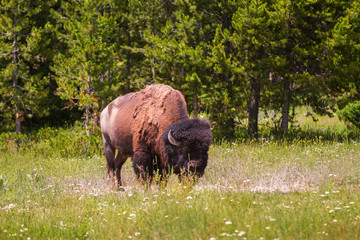 yellowstone national park divorced singles dating site See yellowstone your way yellowstone national park is a photographer's paradise – no matter what your experience or equipment level arts & culture.