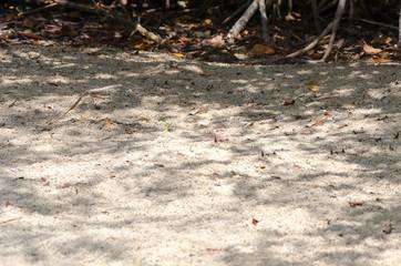 Arid sandy terrain in Aruba island