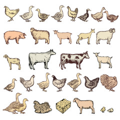 Farm animals big collection vector