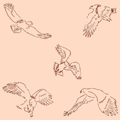 Eagles. Sketch pencil. Drawing by hand. Vintage colors. Vector
