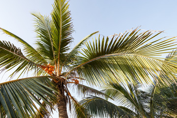 Beautiful landscape, background palm trees on beach