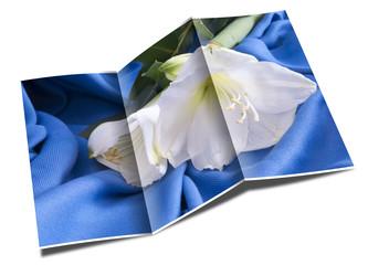 brochure white flower amarillo