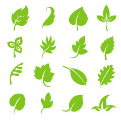 Wall Mural - Leaf icon set. Fresh green leaves various shapes isolated on white background