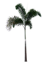 Palm tree on isolated background.