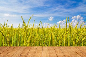 Rice plant in rice field