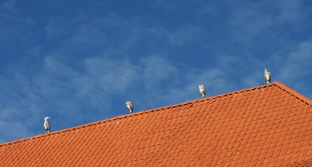 Four Herons