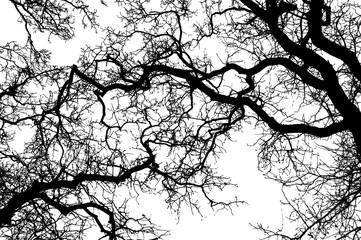 Leafless tree, vector illustration, Ai10