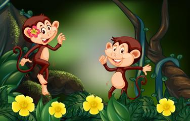 Two monkeys in rain forest