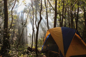 Camping tent in a wooded campsite among trees with light flare effect