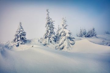 Fantastic winter view in Carpathian mountains with snow covered