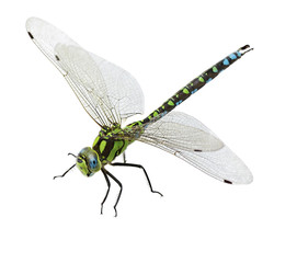 dragonfly isolated