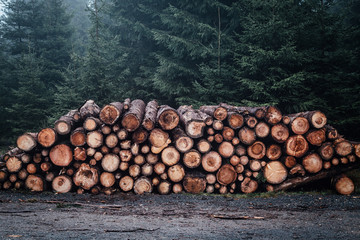 Holz Stapel im Wald