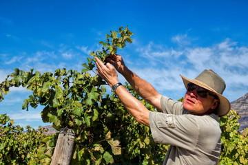 Südafrika, Weinbauer