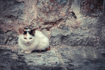 Miserable stray kitten with old stone wall on background and copy space