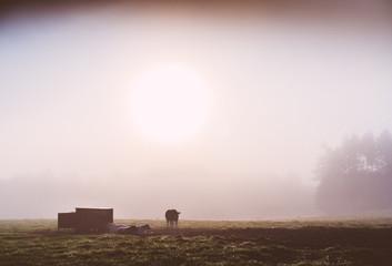 Mist cows