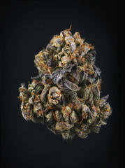 Single cannabis bud (berry noir strain) isolated on black