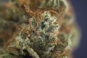 """Macro detail of cannabis bud from """"mango puff"""" marijuana strain"""