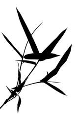 tige de bambou noir sur fond blanc