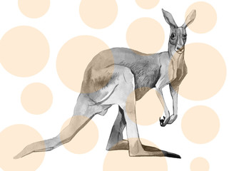 Watercolor kangaroo isolated on white background