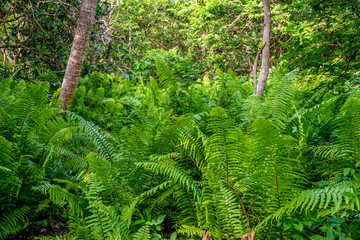 Scenic view of jungle with ferns