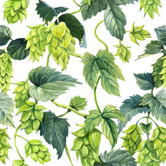Seamless pattern of hops vine painted with watercolour on white