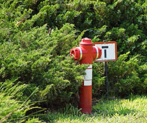 Fire hydrant next to a bush in the park