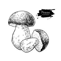 Porcini mushroom hand drawn vector illustration. Sketch food dra