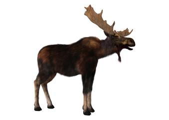 3D Rendering Moose on White