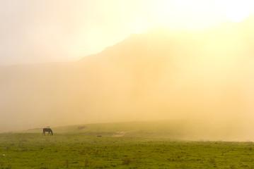 Staande foto Heuvel Caballos en los Lagos de Covadonga (Asturias, España).