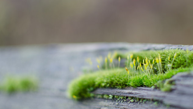 Moss settling on a wooden fence